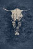 意想不到的背景,有垫铁的一块公牛` s头骨 免版税库存照片