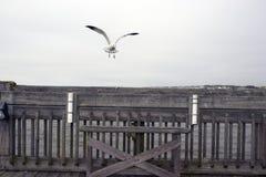 愚蠢海滩南卡罗来纳、2018年2月17日-在渔码头的空的长凳有两个钓鱼竿持有人的和滴下的海鸥  免版税库存照片