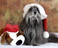 愚蠢的圣诞节狗 免版税图库摄影
