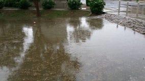 愚钝的雨天在菲尼斯, AZ 免版税库存图片