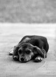 感到无家可归的幼小的小狗哀伤 免版税库存图片