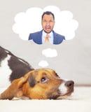 感到逗人喜爱的小狗有罪,认为他的所有者 免版税库存图片