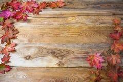 感恩与秋天槭树叶子的问候背景 免版税库存图片