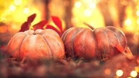 感恩日 秋天收获节日概念 秋天场面 在明亮的自然背景的橙色南瓜 免版税库存照片