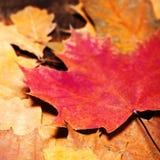 感恩秋天与五颜六色的叶子的秋天背景在r 免版税库存图片