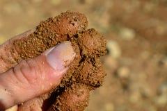 感觉棕色土壤的手指 免版税库存图片