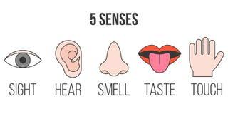 5感觉象 库存例证