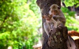 感兴趣的天真观点的一只小猴子 库存图片