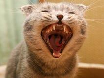 愤怒猫 免版税库存照片