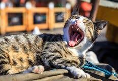 愤怒的猫 免版税库存照片