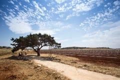 愿望树在塞浦路斯 库存照片