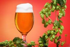 慕尼黑啤酒节在红色背景的啤酒杯蛇麻草 库存照片