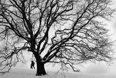 慕尼黑公园在冬天 库存照片