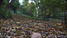 慢动作在公园地面的照相机飞行与黄色叶子 影视素材