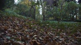 慢动作在公园地面的照相机飞行与黄色叶子 股票视频