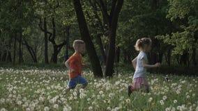 慢动作录影:两孩子在蒲公英的领域到处乱跑在日落 愉快的童年,好时间 股票录像