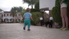 慢动作步行的小婴孩对恶意嘘声和猫奔跑从婴孩 股票录像
