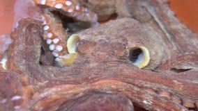慢动作活章鱼在Jagalchi鱼市上 卖海鲜市场釜山 股票视频
