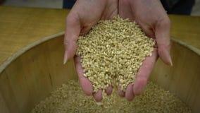 慢动作特写镜头拿着被收获的健康水稻的顶视图两手 股票视频