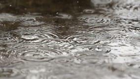 慢动作雨120 Fps 股票视频