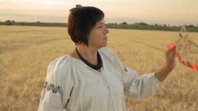慢动作,特写镜头,全国衬衣的妇女在领域在红色连接的手上站立并且看麦子钉 股票视频