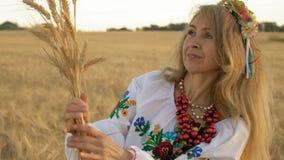 慢动作,特写镜头,美丽的妇女在手上高兴地看麦子小尖峰在领域早晨 影视素材