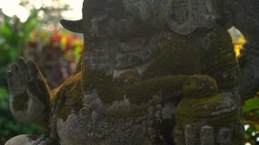 慢动作steadicam用青苔盖的射击了Ganesha神石雕象在一个热带庭院里 股票视频
