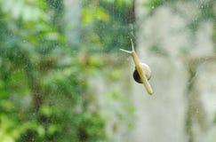 慢慢地上升在玻璃门的蜗牛有庭院背景 免版税库存图片