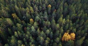 慢慢地滑在树-喜怒无常的录影的上面的森林和湖空中英尺长度,东北镇欧洲 影视素材