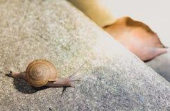 慢慢地爬行在水泥地板上的蜗牛 在土t的Snaile 库存图片