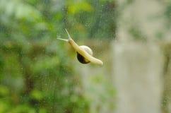 慢慢地爬行在玻璃门的蜗牛有庭院背景 库存图片