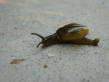 慢慢地爬行的蜗牛 库存照片