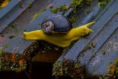 慢慢地移动在房子顶部的黄色蜗牛以确信 这张图片显示大家可能到达他们的目的地 免版税图库摄影