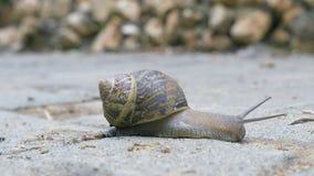 慢慢地移动的伯根地蜗牛 影视素材