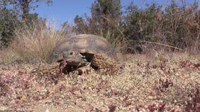 慢沙漠龟 股票视频