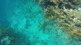 慢的行动 在礁石附近的海底 股票视频