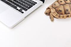慢的连接数和计算机 免版税库存图片