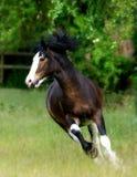 慢跑的马 免版税库存图片