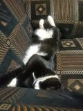 懒惰宠物 免版税图库摄影