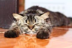 懒惰猫 免版税库存照片