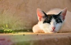 懒惰猫 库存照片