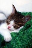 懒惰的小猫 免版税库存照片