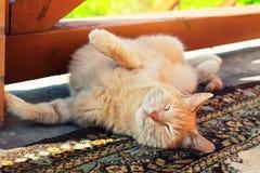 懒惰红色猫在夏天 库存照片