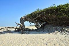 懒惰结构树 库存照片