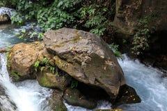 戈兰高地 Banias自然保护 Banias瀑布 库存照片