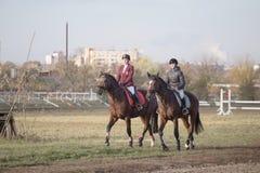 戈梅利,白俄罗斯- 2016年10月16日:两个女孩车手准备在竞争前的马 免版税库存图片