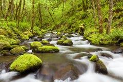戈顿小河在哥伦比亚河峡谷,俄勒冈,美国 免版税库存照片