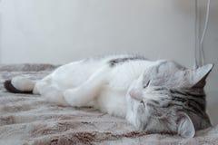 戏弄在梦想的睡觉猫 库存图片