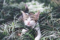 戏耍在领域的一只白色和灰色头发小猫 免版税库存图片