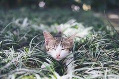 戏耍在领域的一只白色和灰色头发小猫 库存照片